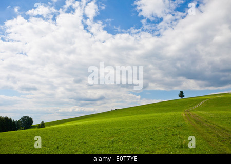 Wiesenweg - Rual way - Stock Photo