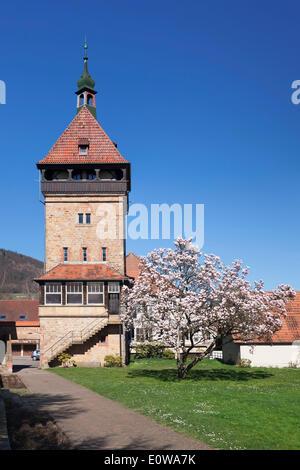 Geilweiler Hof, blooming magnolia tree, Siebeldingen, German Wine Route, Rhineland-Palatinate, Germany - Stock Photo