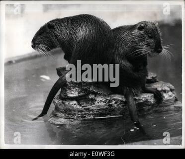 Aug. 08, 1962 - Desert (Island) rats; Every man is an Isaland, said a sociologist, could he have meant that every - Stock Photo