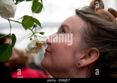 London UK. 20th May 2014. Large crowds attend the RHS Chelsea flower show which opens to the general public. The - Stock Photo