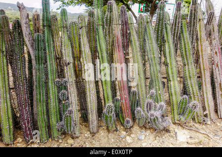 Cactus Fencing Bonaire Dutch West Indies - Stock Photo