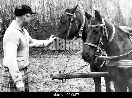 The Duke of Windsor petting horses - Stock Photo