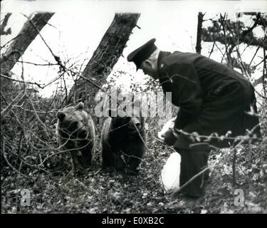 Jan. 01, 1966 - Bears still at large on the isle of Wight; Nikita and Valentina, two Russian bears have for 12 days - Stock Photo