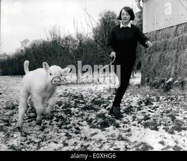 Jan. 01, 1967 - Britain's first Pure-Bred Charolais calf.: The little white bull romping around the snow-covered - Stock Photo