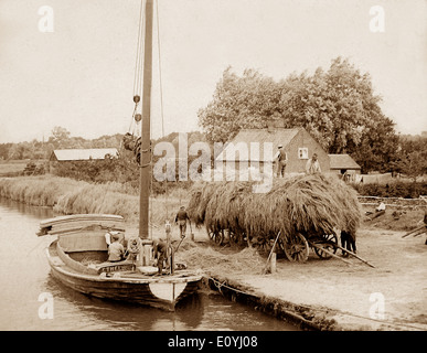 Norfolk Wherry 'Ethel' loading reeds Victorian period - Stock Photo