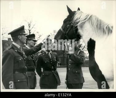 Feb. 26, 2012 - The blues new durth horse joke renaned hanneibal it winsor. A four year-old skewbald gelding, has - Stock Photo