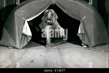 Feb. 29, 2012 - Can An Elephant Blow Up A Tent:The bay elephant finds the new type tent quite to his liking. It - Stock Photo