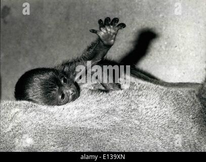 Feb. 29, 2012 - First view of life: ''Darien'' fifteen days old Wooltape, pictured in the Zoo at Basle, Switzerland, - Stock Photo