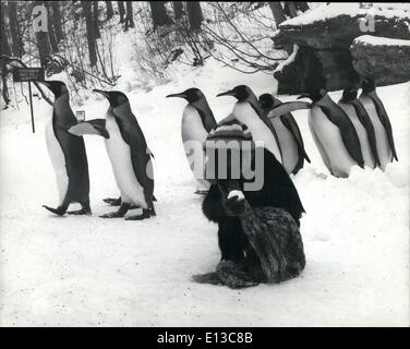 Mar. 02, 2012 - ''Such a Conceited Lot'' These Penguins, walking past me and don't give me a second look all I want - Stock Photo