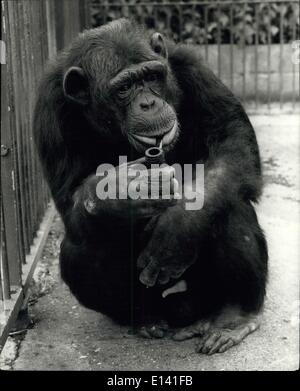 Mar. 31, 2012 - A Pipe's a Man's Best friend.: Williiam, 20-year old Chimpanzee at Cromer Zoo, has been a pipe man - Stock Photo