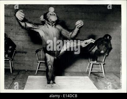 Apr. 17, 2012 - A Clever Little Chimp - Does His Party Piece.. ''How's this' - says Chunky the Chimp - as he demonstrates - Stock Photo