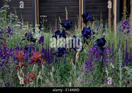 Iris 'Black Swan' in the Cloudy Bay Sensory garden at RHS Chelsea Flower Show 2014 - Stock Photo
