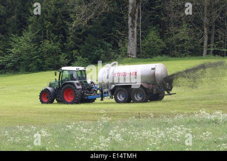 Farmer spreading manure on mown meadow, Allgäu, Bavaria, Germany - Stock Photo