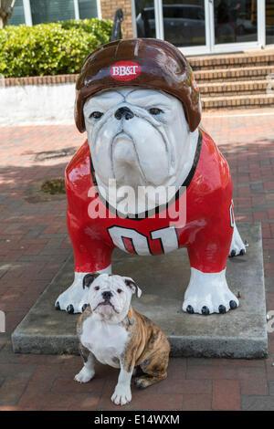 English Bulldog puppy in front of a Bulldog sculpture wearing a baseball uniform, Athens, Georgia, United States - Stock Photo