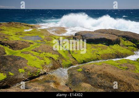 Surf on lava rocks covered in green algae, Playa Paraiso, Adeje, Tenerife, Canary Islands, Spain - Stock Photo
