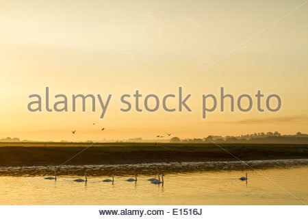 Autumn landscape. Early morning sun in September on the River Trent at Stoke Bardolph in the Nottinghamshire countryside, - Stock Photo