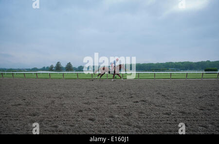 Elmont, New York, USA. 23rd May, 2014. Kentucky Derby and Preakness winner CALIFORNIA CHROME with exercise rider - Stock Photo