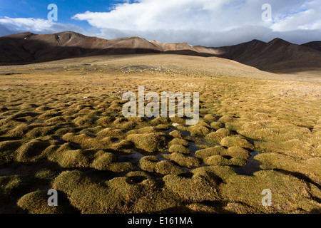 Landscape in region of Tisaling located on trail between Rumtse and Tso Kar, Ladakh, Jammu and Kashmir, India - Stock Photo