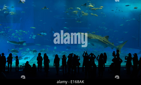 A whale shark swims past visitors viewing the main tank of the Churaumi Aquarium, Okinawa, Japan - Stock Photo