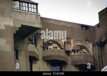 Glasgow, Scotland, UK. 24th May, 2014. Close up of damage to upper floor 'hen run' area to rear Credit:  ALAN OLIVER/Alamy - Stock Photo
