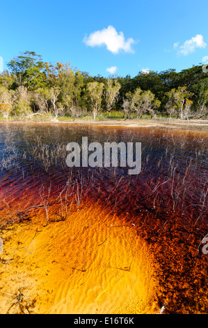 Lake Boomanjin, on Fraser Island, is fed by creeks passing through a wallum swamp where they collect tannin which - Stock Photo