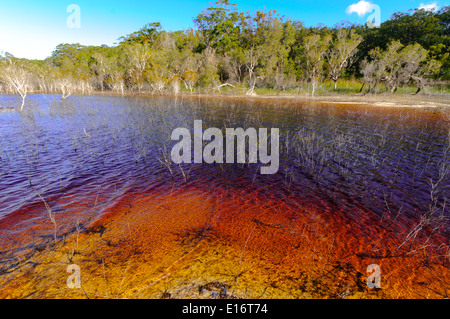 Lake Boomanjin, on Fraser Island, QLD, is fed by creeks passing through a wallum swamp where they collect tannin - Stock Photo
