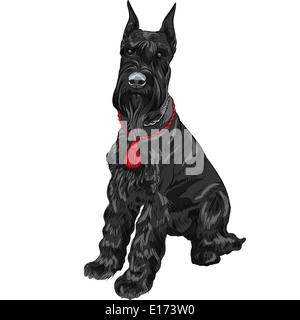 dog breed Giant Schnauzer color black isolated in the white background - Stock Photo