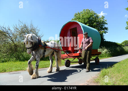 Black Country Traveller 26 year old Chris Millard on his way to Appleby Horse Fair with his bowtop caravan pulled - Stock Photo