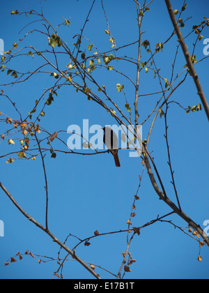 Bird perched on a tree branch - Stock Photo