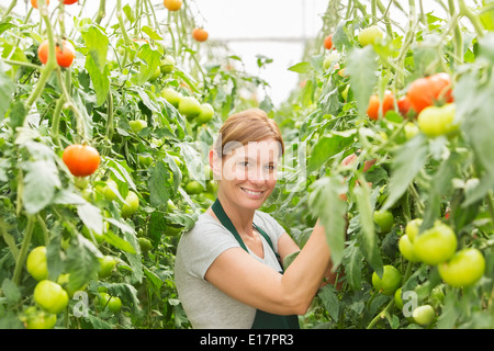 Portrait of woman tending to tomato plants in greenhouse - Stock Photo