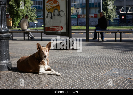 stray dogs lying on avenida libertador general bernado o'higgins downtown Santiago Chile - Stock Photo