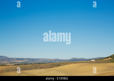 Rural landscape under blue sky - Stock Photo