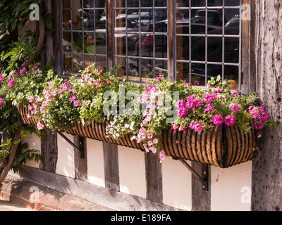 Leaded glass windows and window box with flowers on old oak framed house, Lavenham, Suffolk, England, UK - Stock Photo