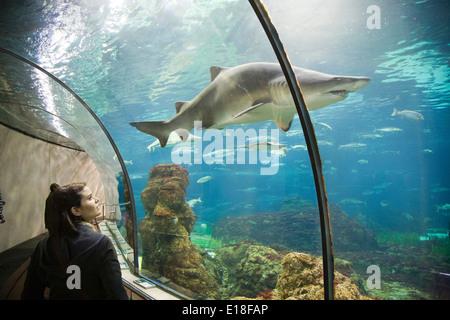 shark, aquarium, barcelona, catalonia, spain, europe - Stock Photo