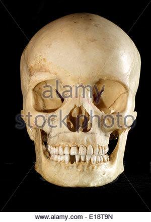 Studio Still Life of a Human Skull on a black background