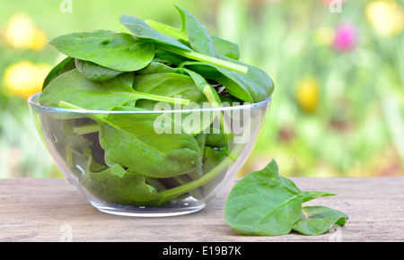 Fresh baby spinach leaves in a bowl - Stock Photo