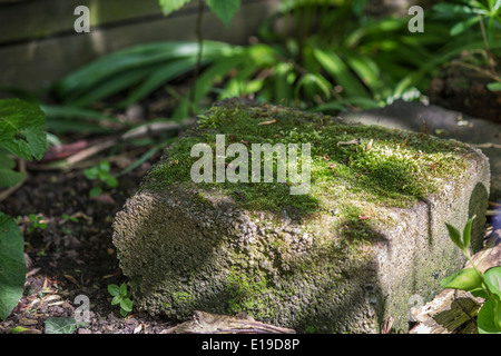 Moss growing on a concrete block left in a garden - Stock Photo