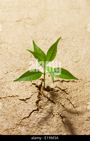 small plant breaking out from cracked soil - Stock Photo
