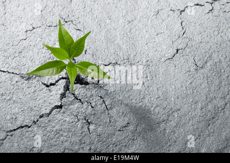 small plant breaking out from cement ground - Stock Photo