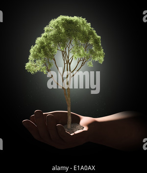 A tree held in a palm of a hand - Stock Photo