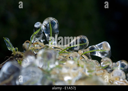 Frosted grass in winter - Stock Photo