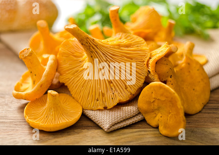 A grouping of freshly picked chanterelle mushrooms. - Stock Photo