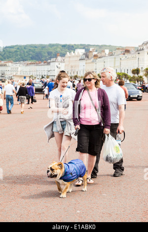 Family walking along the promenade, with English Bulldog, Conway, Llandudno, Wales. - Stock Photo