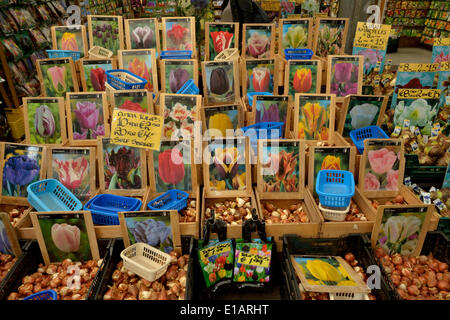 Tulip bulbs at the traditional flower market, Amsterdam, Holland, The Netherlands - Stock Photo