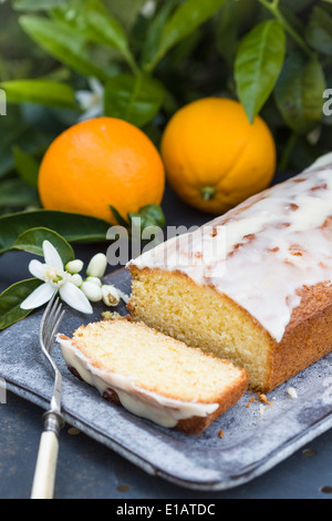 orange drizzle cake on garden metal table, with oranges and orange blossom, with orange tree in the background. - Stock Photo