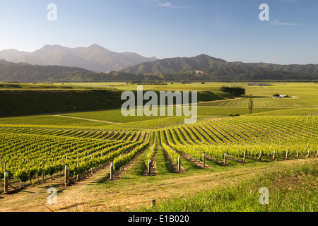 Vineyards along Delta Lake Heights Road, Renwick, near Blenheim, Marlborough region, South Island, New Zealand, - Stock Photo