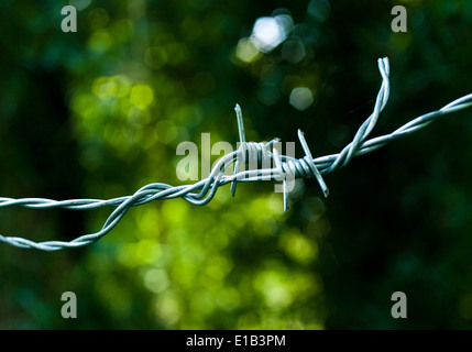 A close-up study of barbed wire in sharp relief against a green botanical background. - Stock Photo