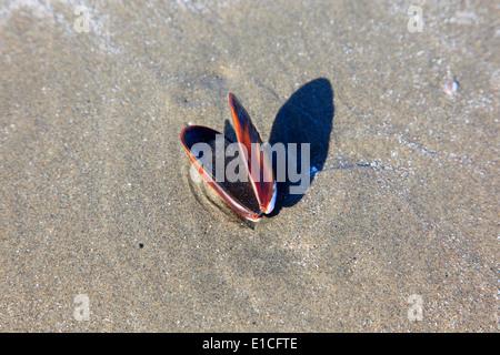 shell on long beach