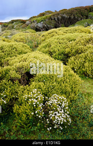 Bushes and forest on the sub-Antarctic Enderby island. - Stock Photo