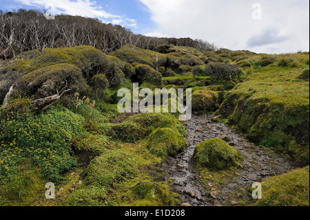 Small stream on Enderby island. - Stock Photo